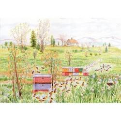 Ansichtkaart Zomer bijenstal