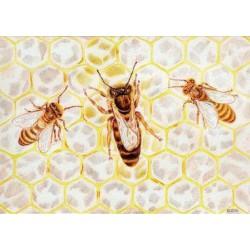 Ansichtkaart Bijenkoningin
