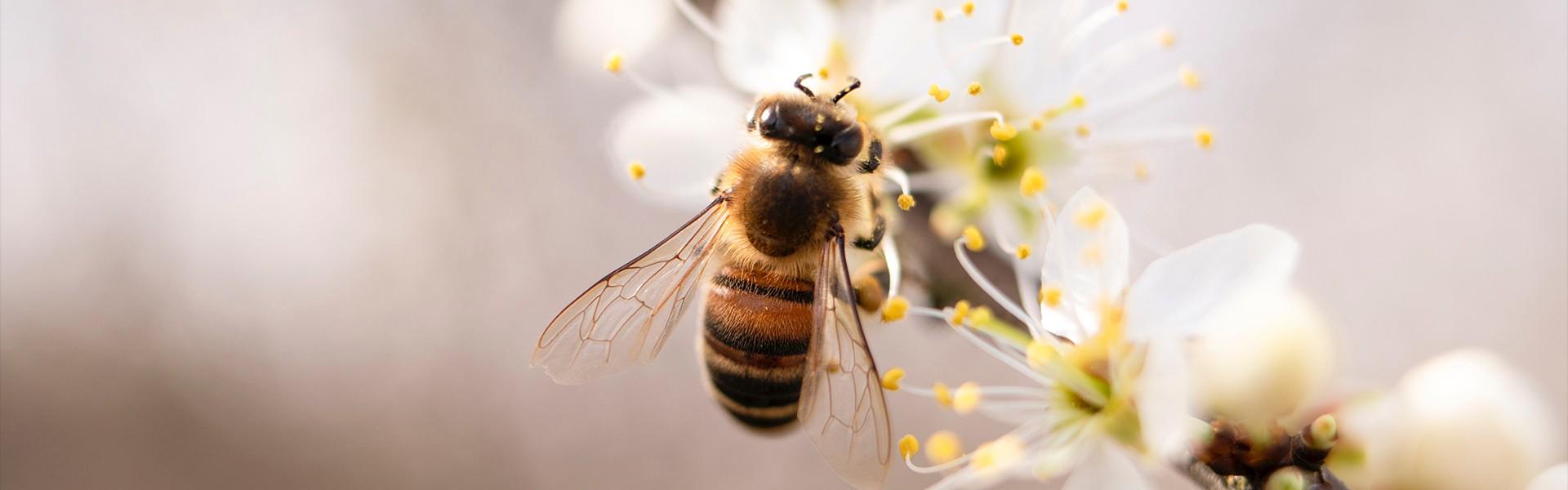 Het Bijenhuis